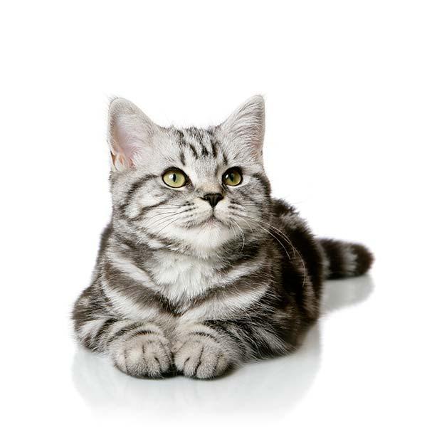 Dog & Cat Vaccinations