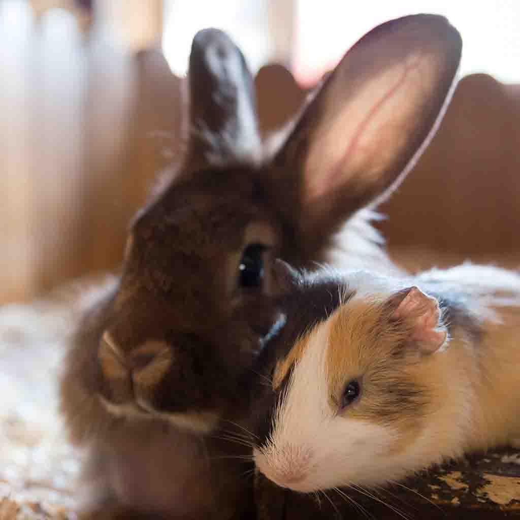 Rabbits and Small Mammals